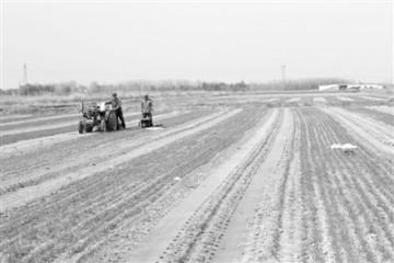 天然优势叠加科技支撑内蒙古河套农业走向更高端
